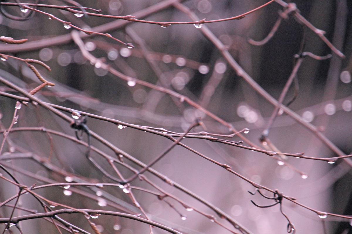 water-drop-on-tree-branch