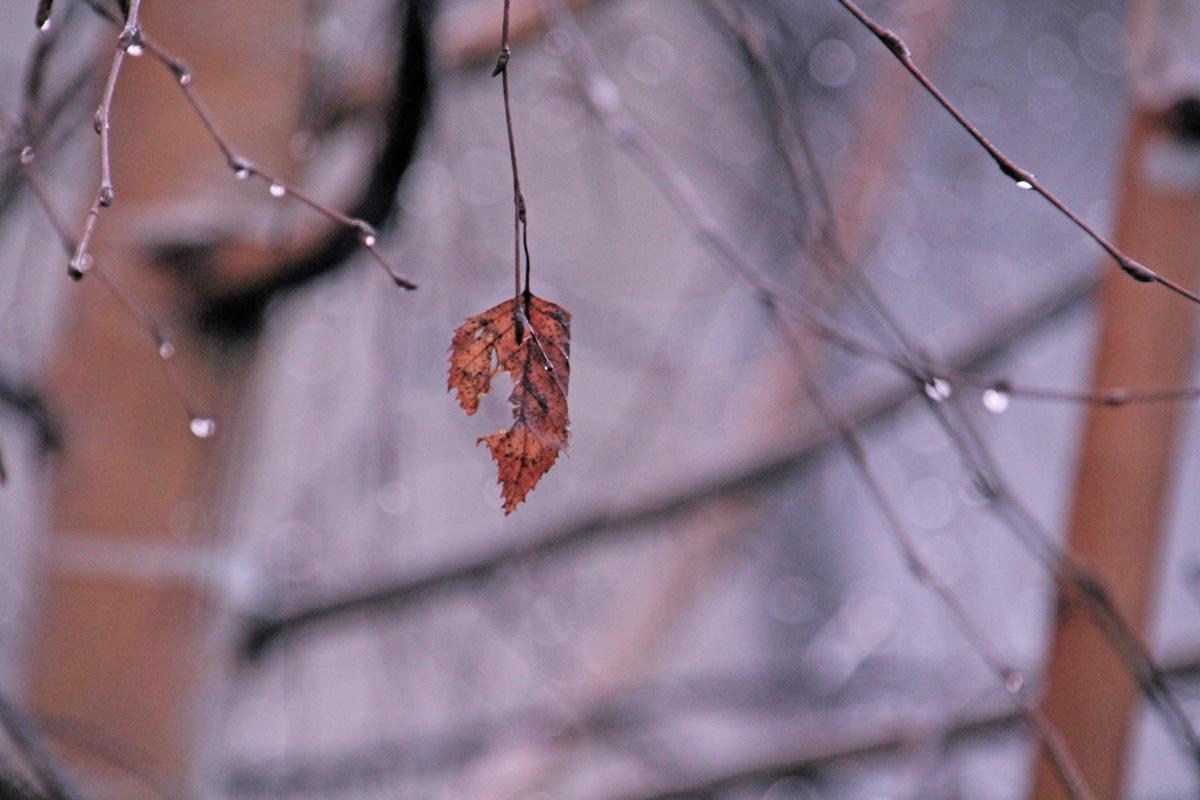 leaf on tree