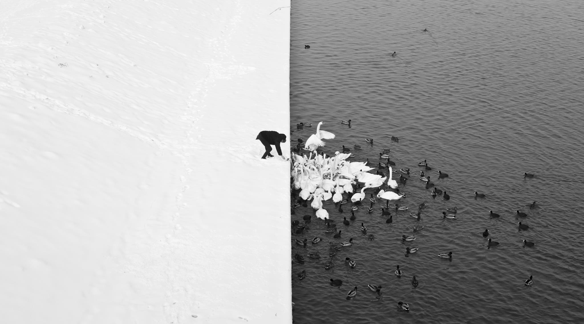canards-Cracovie-Marcin-Ryczek-