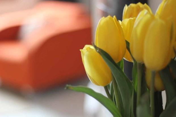 spring-at-home3