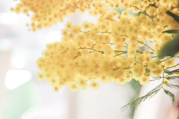 amoremiobello mimosa
