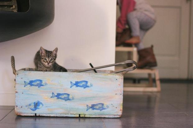 amoremiobello - chaton-tigré noir gris blanc 2 mois-3