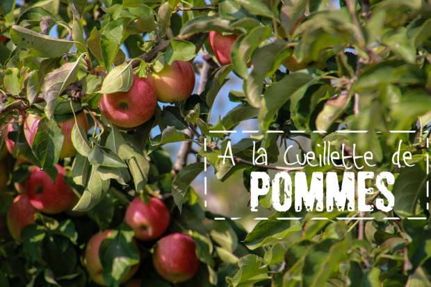amoremiobello-cueillette-des-pommes-vidauban-chateau-astros-1-2