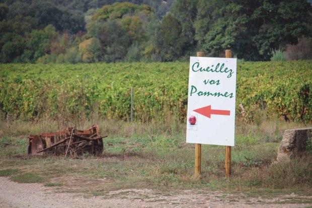 amoremiobello cueillette des pommes vidauban chateau astros-1