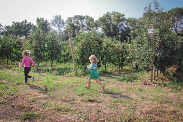 amoremiobello cueillette des pommes vidauban chateau astros-12
