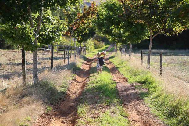 pemberton amoremiobello green cabin farmstay-58