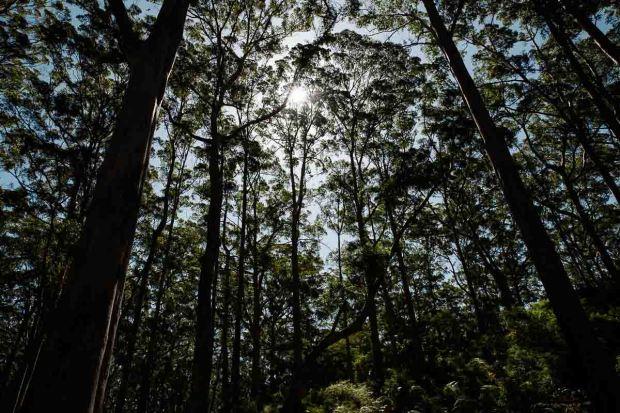 amoremiobello-western-australia-trip-dunsborough-69