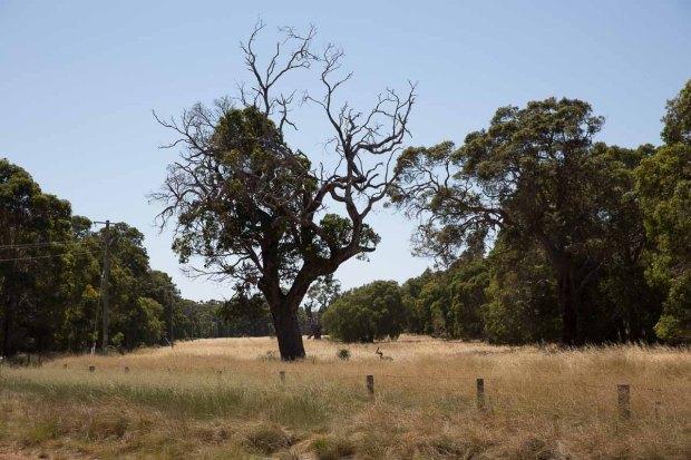 amoremiobello-western-australia-trip-dunsborough-71
